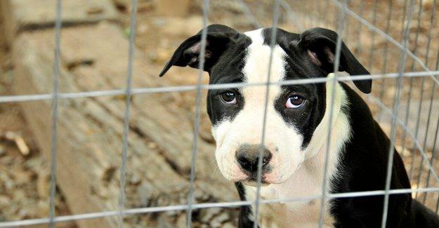 Escocia desata agravamiento de pena máxima por crueldad hacia los animales, aumentando la pena de prisión de 1 año a 5