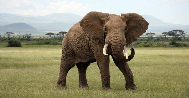 Fugitivo buscado en NOSOTROS por la presunta marfil, cuerno de rinoceronte tráfico detenido en Kenia