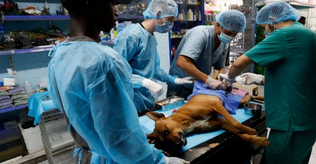 Los habitantes de gaza desafiar los tabúes de rescate, de esterilización de animales callejeros