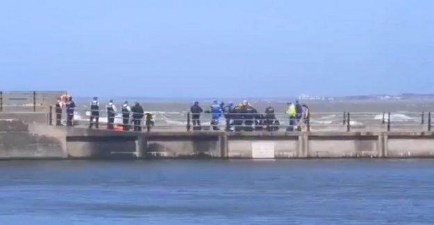 Mujer muere en el mar 'tratando de ayudar perro rescatista'