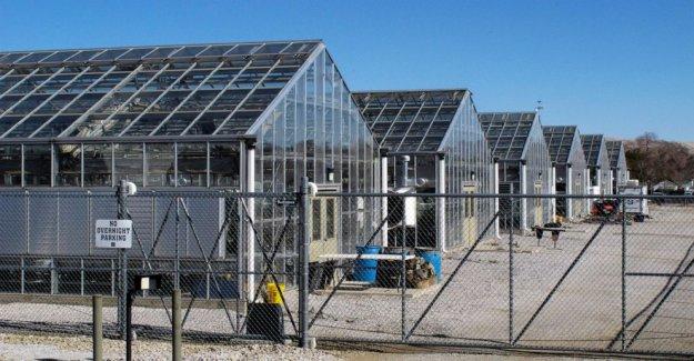 NOS reflexiona en peligro el estado de Nevada de la planta en la mina de lucha