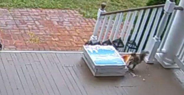 Nueva Jersey ardilla sorprendido robando pizza después de la entrega sin contacto