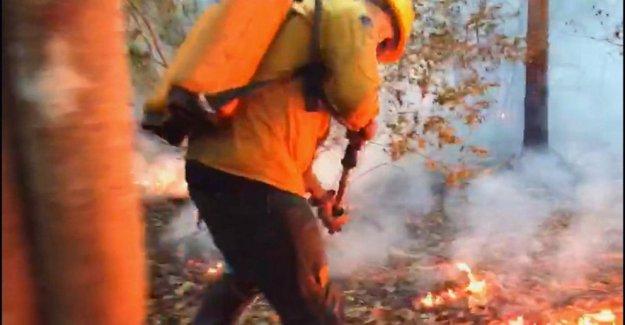 Número de incendios aumenta en el Pantanal de Brasil de los humedales
