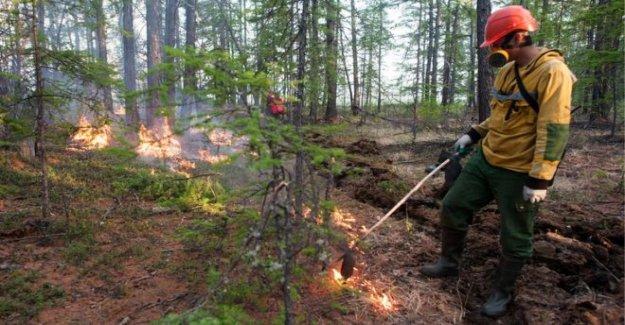 Siberiano ola de calor 'clara evidencia del cambio climático
