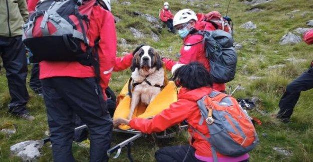 Tablas convertido, como dice San Bernardo necesidades de rescate de montaña
