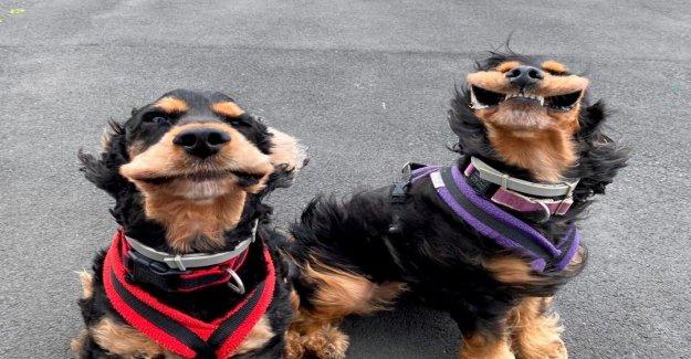 Viral imágenes muestran a dos perros con sus bocas aleteo debido a una fuerte ráfaga de viento