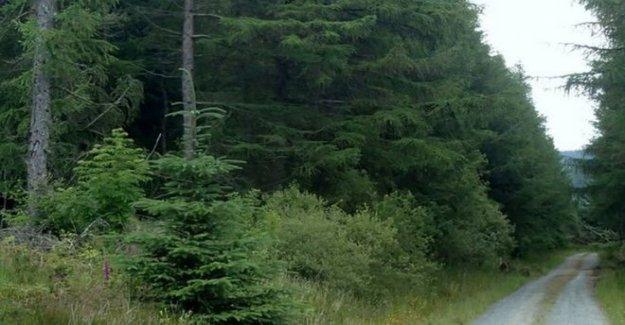 'Alrededor de 100' asistir bosque rave