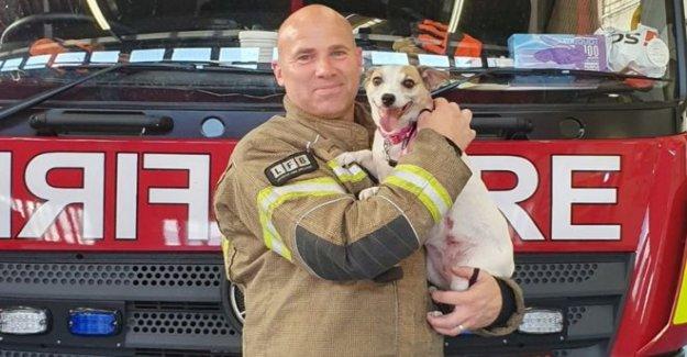 Bombero fomenta el perro que salvó de las llamas
