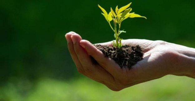 Cómo jardinería podría ayudar en la lucha contra la obesidad
