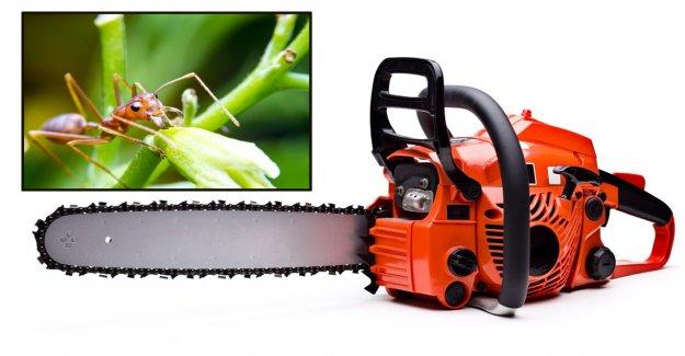 De Carolina del norte condado advierte de la motosierra de los accidentes, las hormigas de fuego en la estela de Isaias