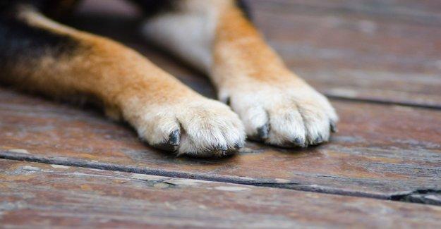 El Coronavirus infectados Louisiana perro es el primero en el estado de resultados positivos para la COVID-19