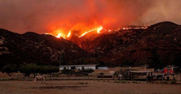El hombre reencontrará con el perro pensó que había muerto en California wildfire