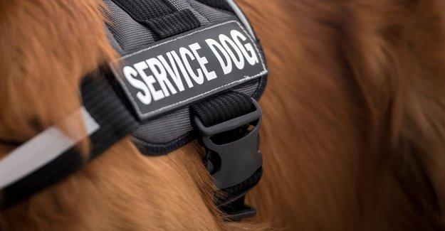 Ex-soldado de la bicicleta de casi 400 kilómetros para recaudar fondos para el apoyo emocional de los perros para los veteranos
