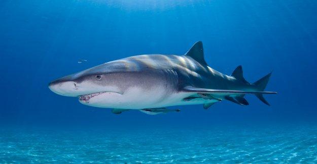 Florida pescador mordido por un tiburón después de que anteriormente la picadura de gator