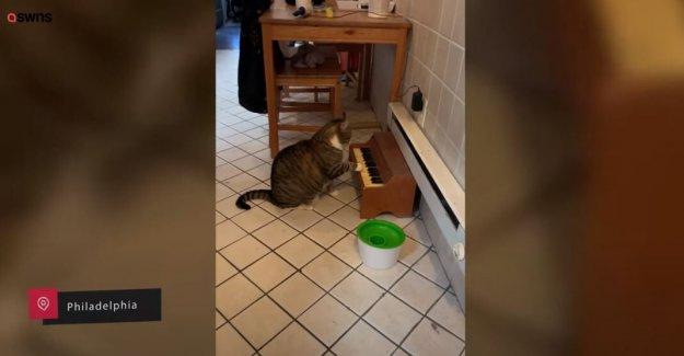 Gato atigrado toca el piano para decirle a los propietarios tiene hambre