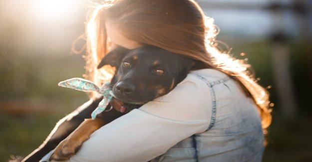 La empresa ofrece la pata-ternity' dejar, $300 hacia mascota-las tasas de adopción para sus empleados