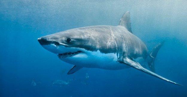 Largas playas de la Isla cerca de en medio de avistamientos de tiburón: informe