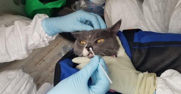 Los gatos domésticos en Texas la primera en el estado de resultados positivos para la coronavirus