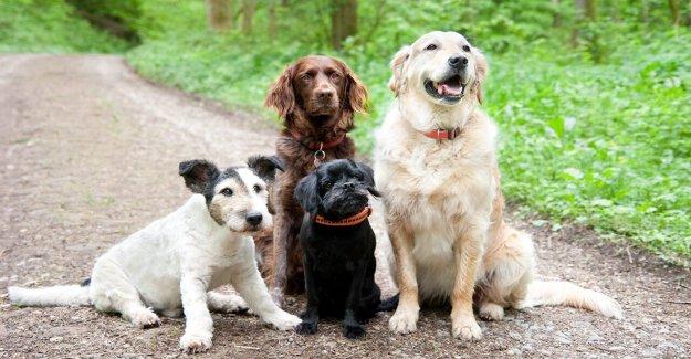 Los perros mayores pueden jubilarse cómodamente en esta Nueva Jersey santuario