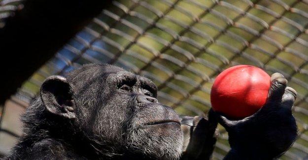 Los problemas financieros de los zoológicos podría ser la última pandemia de víctimas