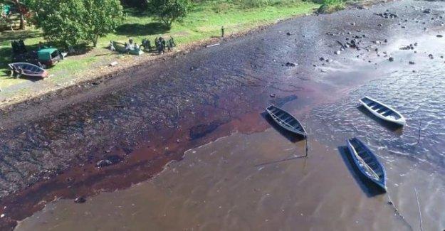 Los voluntarios de la carrera para mantener el derrame de petróleo lejos de Mauricio