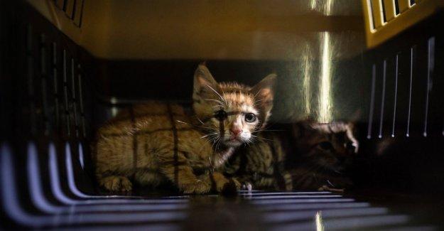 Los voluntarios de rescate de mascotas, la búsqueda de aquellos perdidos en Beirut explosión
