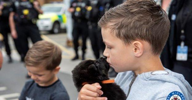 Niño, de 8 años, las caricias de la policía de los cachorros en la lista de cubo día
