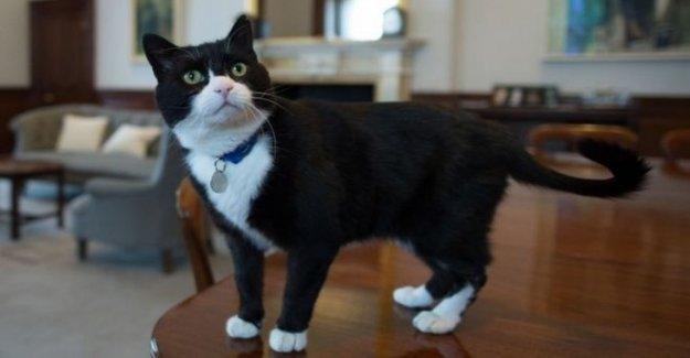 Oficina de relaciones exteriores de gato Palmerston se retira al campo
