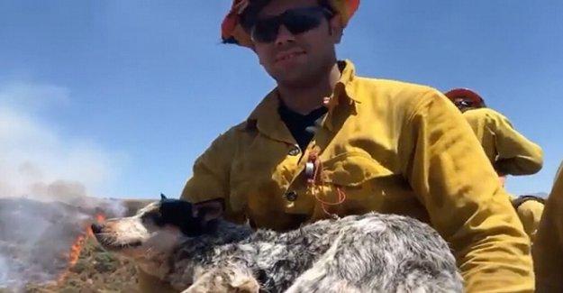 Perdido perro rescatado de Apple Fuego por los bomberos; blaze ahora un 30% contenidos