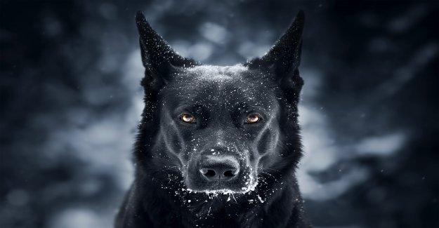 Perro se parece a Batman en llamativo de la foto: fue sólo por una fracción de segundo'