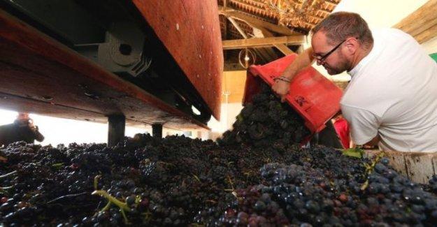 Por qué Francia champagne burbuja ha estallado
