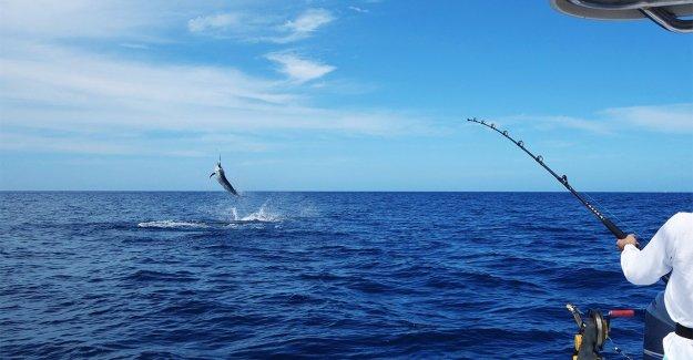 Texas pescadores ganar el torneo con 737 libras marlin