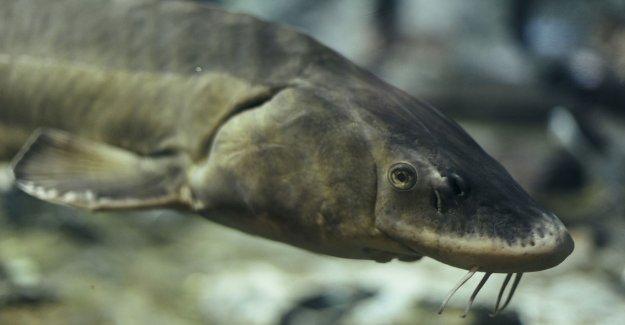 Cornell research group rompe récord de pesca que se estableció