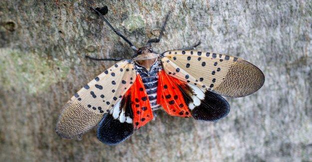 Residentes del noreste dijeron que destruyan insectos invasores