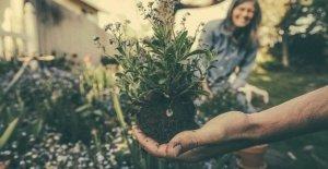 2020 será el año internacional de la salud de las plantas