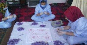 Afganistán, la revolución de azafrán: 12 mujeres producen, de cruzar las fronteras y emancipano