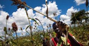 Alimentos, los precios mundiales de los alimentos aumentan: el cambio climático es una de las razones
