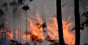 Australia: el fuego de 70 metros de alto, los incendios fuera de control, con un récord de calor de más de 50 grados