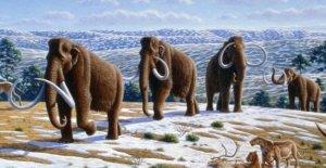 El mamut que vivió hace 60 años,...