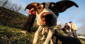 Los animales en la ciudad: en Italia, entre el 11 y 27 millones de perros registrados