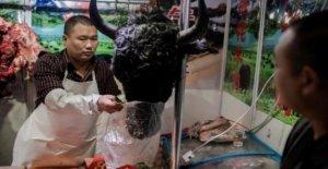 Coronavirus, China pone una prohibición de la carne de animales salvajes