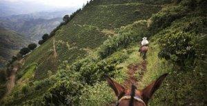 En Colombia, la nueva guerra ganada por los traficantes de drogas: los aparceros y campesinos dejan sus tierras