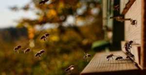 Para comunicarse con la api. Reveló más de 1.500 movimientos únicos
