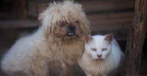 Animales y coronavirus: Una mascota-terapia contra la ansiedad, para toda la familia