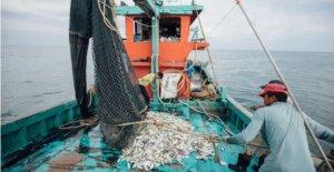 En Asia los pescadores y los agricultores van digital durante virus