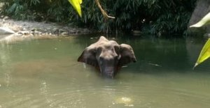 Indignación por elefante 'petardo fruto de la muerte de