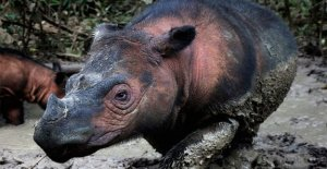 Los animales y las plantas están extinguiéndose en un  ritmo sin precedentes,' impactante estudio dice