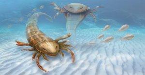 8 pies de escorpiones de mar nadando el océano 500M años tuvo enormes garras para atrapar a sus presas