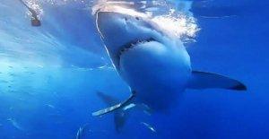 Ataque de tiburón en Australia mata a hombre de pesca submarina, cuarto ataque mortal de este año