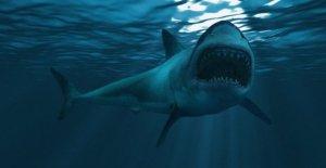 Australia pescadores registro aterrador encuentro con el gran tiburón blanco como círculos, carneros barco